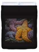 Colorful Starfish Duvet Cover