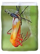 Coming Of Age - Large Milkweed Bug - Oncopeltus Fasciatus Duvet Cover