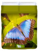 Common Blue Morpho Duvet Cover
