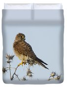 Common Kestrel Falco Tinnunculus 3 Duvet Cover