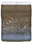 Common Teal Anas Crecca Duvet Cover