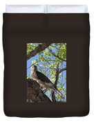 Cooper's Hawk In A Cottonwood Duvet Cover