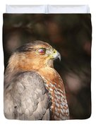 Coopers Hawk In Profile Duvet Cover