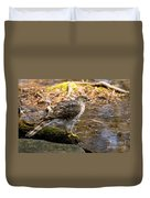 Coopers Hawk Pictures 61 Duvet Cover