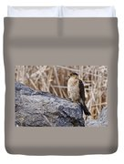Coopers Hawk Pictures 91 Duvet Cover
