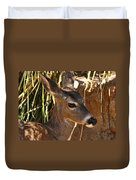 Coues White-tailed Deer - Sonora Desert Museum - Arizona Duvet Cover