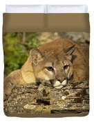 Cougar On Lichen Rock Duvet Cover