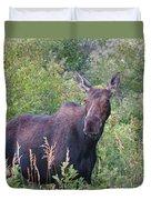 Cow Moose Portrait Duvet Cover