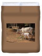 Cows In Hampi Duvet Cover