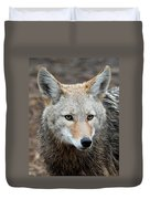 Coyote Duvet Cover
