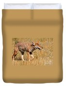Coyote In Rocky Mountain National Park Duvet Cover