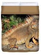 Cozumel Iguana Vacation Duvet Cover