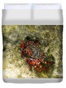 Crab In Cozumel Duvet Cover