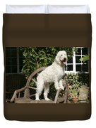 Cream Labradoodle On Wooden Chair Duvet Cover