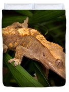Crested Gecko Rhacodactylus Ciliatus Duvet Cover