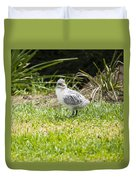 Crested Tern Chick - Montague Island - Australia Duvet Cover