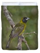 Crimson-collared Grosbeak Duvet Cover