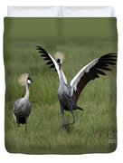 Crowned Cane Courtship Display Duvet Cover