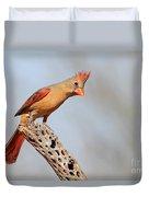 Curious Cardinal Duvet Cover