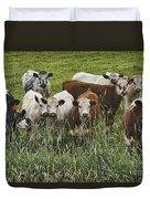 Curious Cows Duvet Cover