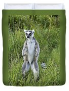 Curious Ring-tail Duvet Cover