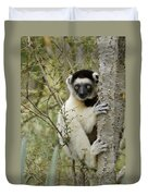 Curious Sifaka 1 Duvet Cover