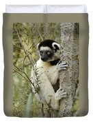 Curious Sifaka 2 Duvet Cover