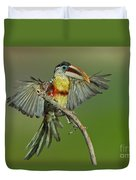 Curl-crested Aracari About To Perch Duvet Cover