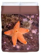Cushion Winged Sea Star Duvet Cover