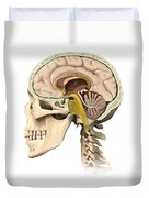 Cutaway View Of Human Skull Showing Duvet Cover