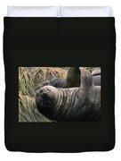 Cute Seal Duvet Cover