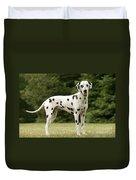 Dalmatian Dog Duvet Cover
