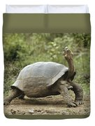 Darwins Finch And Volcan Alcedo Giant Duvet Cover