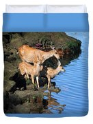Deer Family By The Ocean At Low Tide Duvet Cover