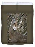 Deer Pictures 444 Duvet Cover
