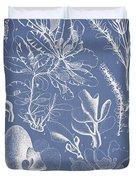 Delesseria Middendorfii Duvet Cover by Aged Pixel