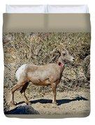 Desert Bighorn Sheep Ewe With Radio Duvet Cover