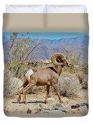 Desert Bighorn Sheep Ram At Borrego Duvet Cover