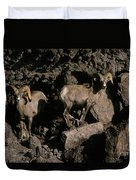 Desert Bighorns Ovis Canadensis Nelsoni Duvet Cover