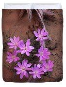 Desert Chicory Rafinesquia Neomexicana Duvet Cover