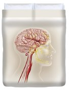 Detail Of Ateries Of The Human Head Duvet Cover