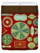 Diatoms-ernst Haeckel Duvet Cover