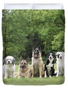 Dogs, Various Breeds In A Line Duvet Cover