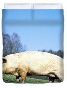 Domestic Pig Sus Scrofa Domesticus Duvet Cover by Tierbild Okapia