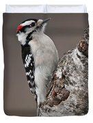 Downy Woodpecker Pictures 11 Duvet Cover
