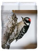 Downy Woodpecker Pictures 26 Duvet Cover