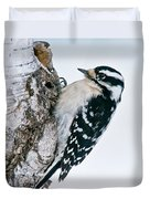 Downy Woodpecker Pictures 27 Duvet Cover