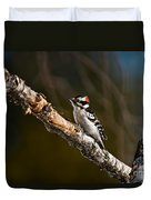 Downy Woodpecker Pictures 36 Duvet Cover