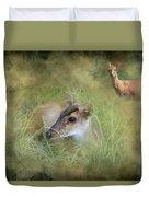 Duiker Endangered Antelope Duvet Cover