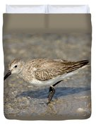 Dunlin Calidris Alpina In Winter Plumage Duvet Cover